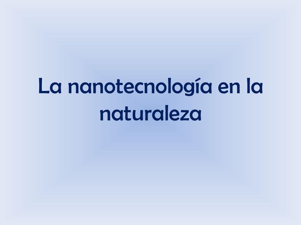 Fuentes http://www.bbc.co.uk/mundo/noticias/2011/12/111216_mariposa_falsificacion_ar.shtml http://www.xatakaciencia.com/nanotecnologia/claves-contra-la-falsificacion-en-la-naturaleza www.xatakaciencia.com/categoria/nanotecnologia http://www.solociencia.com/biologia/10072303.htm http://www.nisenet.org/sites/default/files/catalog/uploads/spanish/8886/structuresbutterfly_s ign_sp_08nov11_0.pdf http://www.nisenet.org/sites/default/files/catalog/uploads/spanish/8886/structuresbutterfly_s ign_sp_08nov11_0.pdf http://youtu.be/InKI9Nc1hpQ The strange new world of Nanoscience http://www.youtube.com/watch?v=70ba1DByUmMhttp://www.youtube.com/watch?v=70ba1DByUmM