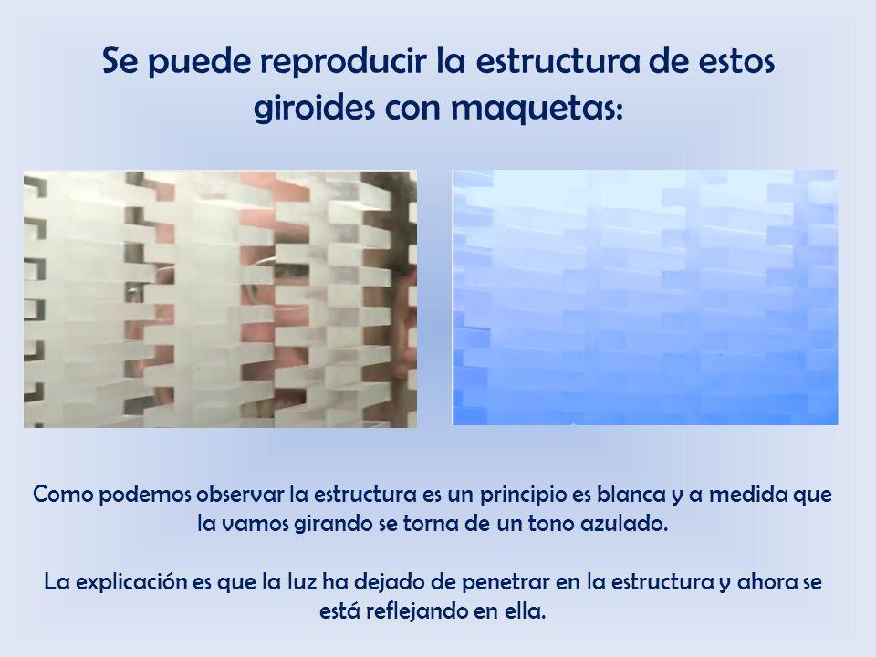 Se puede reproducir la estructura de estos giroides con maquetas: Como podemos observar la estructura es un principio es blanca y a medida que la vamos girando se torna de un tono azulado.