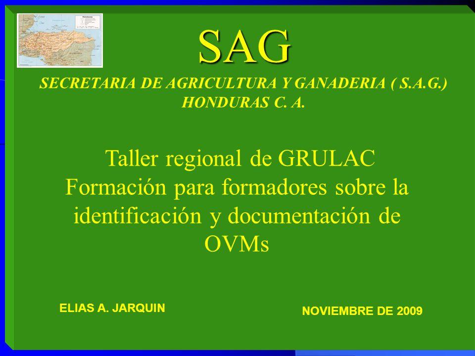 SAG SECRETARIA DE AGRICULTURA Y GANADERIA ( S.A.G.) HONDURAS C. A. Taller regional de GRULAC Formación para formadores sobre la identificación y docum