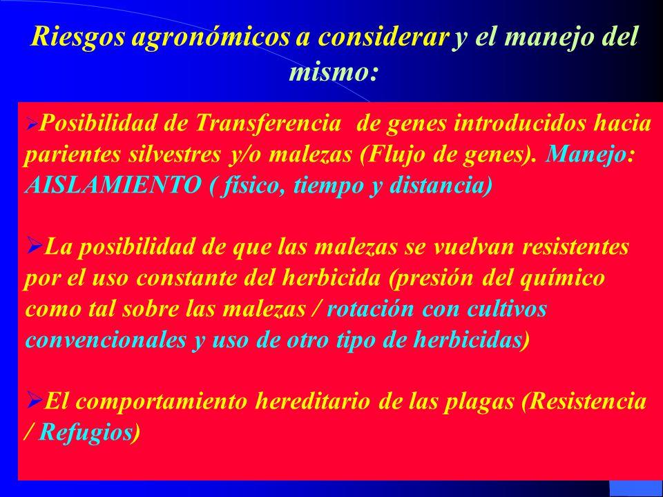 Posibilidad de Transferencia de genes introducidos hacia parientes silvestres y/o malezas (Flujo de genes). Manejo: AISLAMIENTO ( físico, tiempo y dis