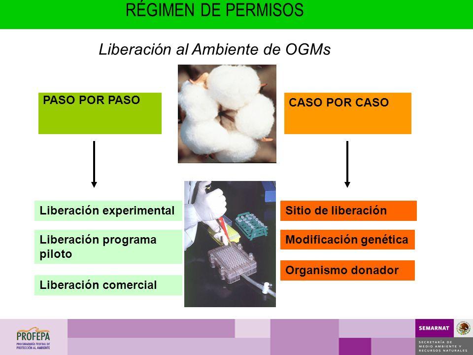 Liberación experimentalSitio de liberación PASO POR PASO CASO POR CASO Modificación genética Organismo donador Liberación programa piloto Liberación c