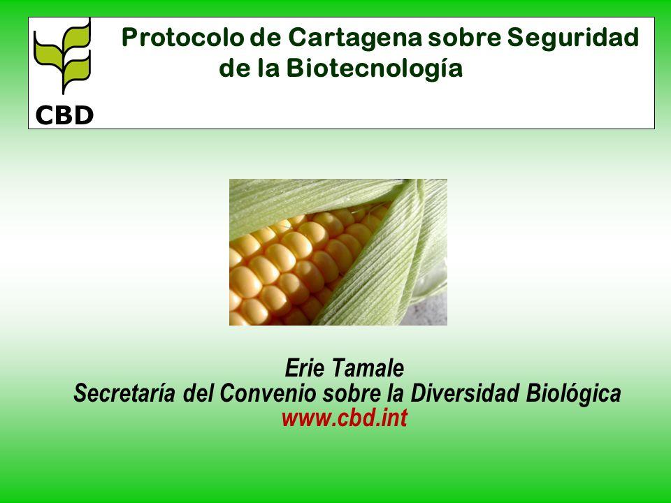 Erie Tamale Secretaría del Convenio sobre la Diversidad Biológica www.cbd.int Protocolo de Cartagena sobre Seguridad de la Biotecnología CBD