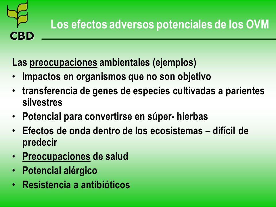 CBD Los efectos adversos potenciales de los OVM Las preocupaciones ambientales (ejemplos) Impactos en organismos que no son objetivo transferencia de