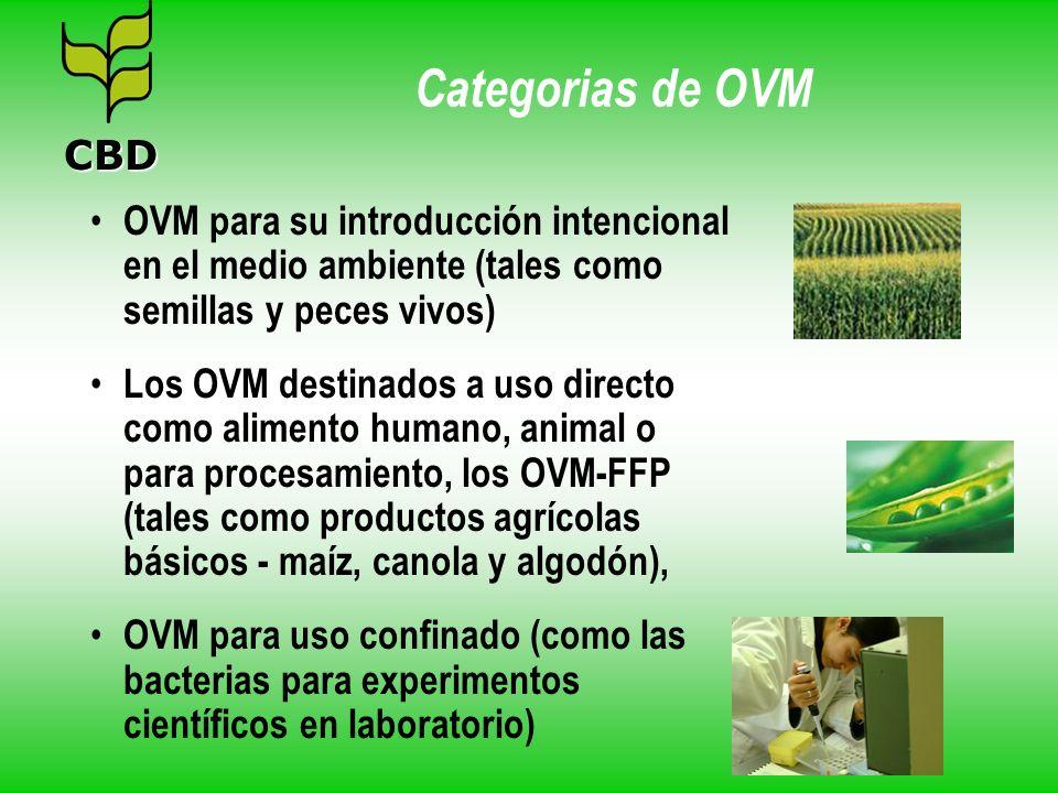 Categorias de OVM OVM para su introducción intencional en el medio ambiente (tales como semillas y peces vivos) Los OVM destinados a uso directo como