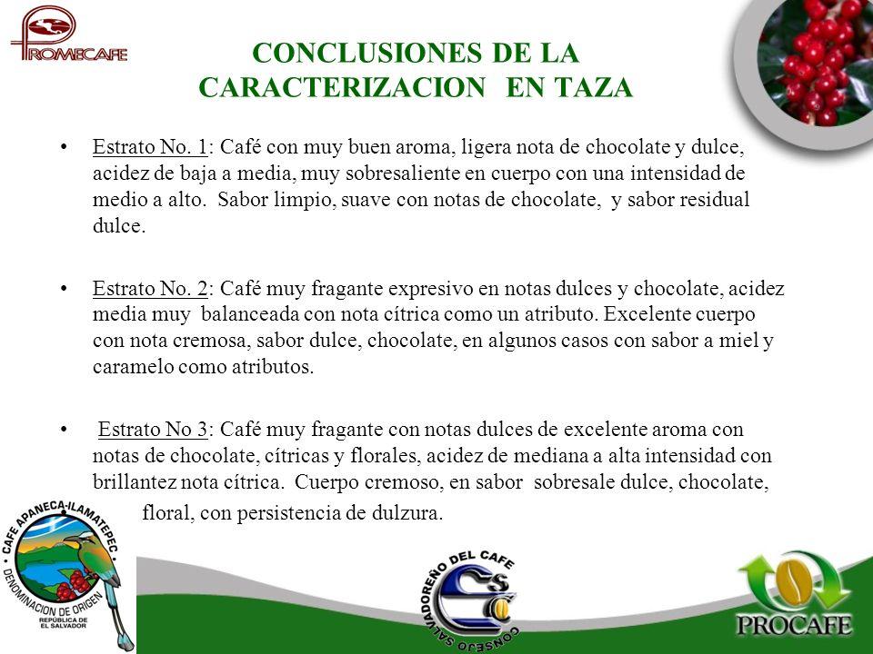 CONCLUSIONES DE LA CARACTERIZACION EN TAZA Estrato No. 1: Café con muy buen aroma, ligera nota de chocolate y dulce, acidez de baja a media, muy sobre