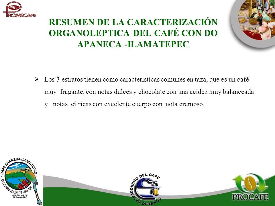 RESUMEN DE LA CARACTERIZACIÓN ORGANOLEPTICA DEL CAFÉ CON DO APANECA -ILAMATEPEC Los 3 estratos tienen como características comunes en taza, que es un
