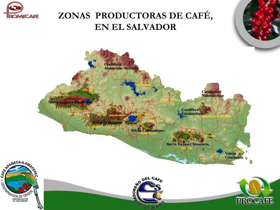 ZONAS PRODUCTORAS DE CAFÉ, EN EL SALVADOR