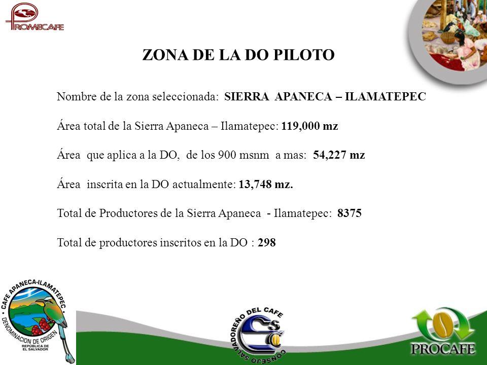 Nombre de la zona seleccionada: SIERRA APANECA – ILAMATEPEC Área total de la Sierra Apaneca – Ilamatepec: 119,000 mz Área que aplica a la DO, de los 9