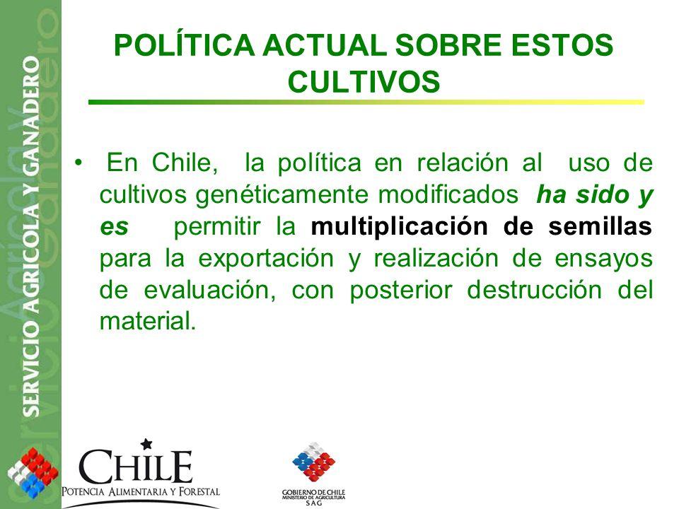 POLÍTICA ACTUAL SOBRE ESTOS CULTIVOS En Chile, la política en relación al uso de cultivos genéticamente modificados ha sido y es permitir la multiplic