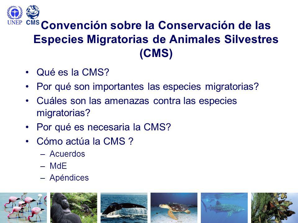Convención sobre la Conservación de las Especies Migratorias de Animales Silvestres (CMS) Qué es la CMS? Por qué son importantes las especies migrator