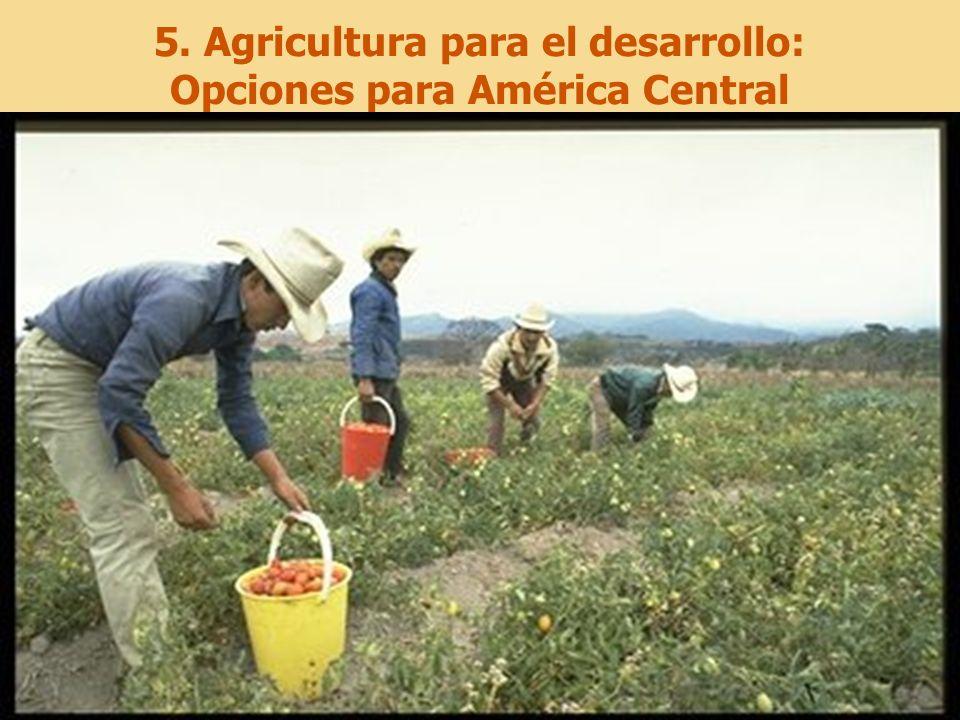 26 5. Agricultura para el desarrollo: Opciones para América Central