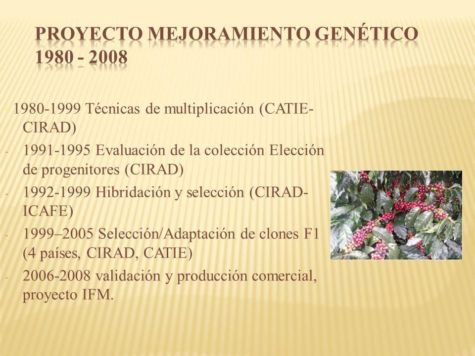 - 1980-1999 Técnicas de multiplicación (CATIE- CIRAD) - 1991-1995 Evaluación de la colección Elección de progenitores (CIRAD) - 1992-1999 Hibridación y selección (CIRAD- ICAFE) - 1999–2005 Selección/Adaptación de clones F1 (4 países, CIRAD, CATIE) - 2006-2008 validación y producción comercial, proyecto IFM.
