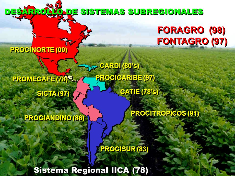 DESARROLLO DE SISTEMAS SUBREGIONALES PROMECAFE (78) PROCISUR (83) PROCIANDINO (86) PROCITROPICOS (91) SICTA (97) PROCICARIBE (97) PROCINORTE (00) CATI