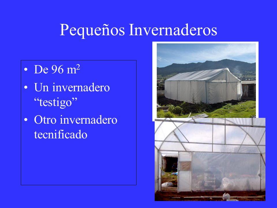 Pequeños Invernaderos De 96 m 2 Un invernadero testigo Otro invernadero tecnificado