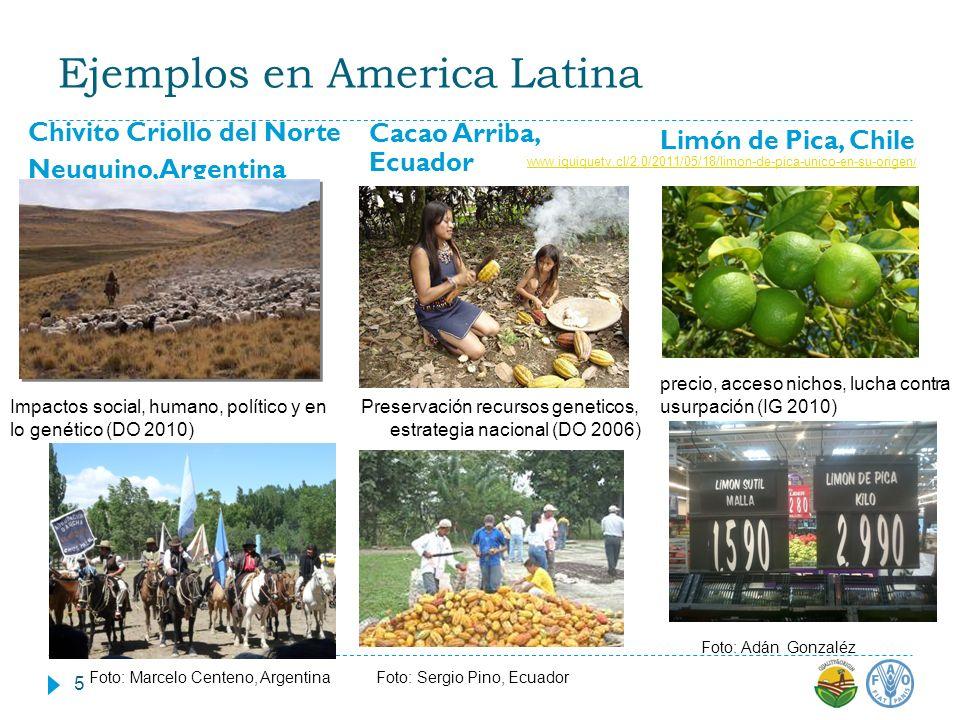 Ejemplos en America Latina Chivito Criollo del Norte Neuquino, Argentina Cacao Arriba, Ecuador Preservación recursos geneticos, estrategia nacional (D