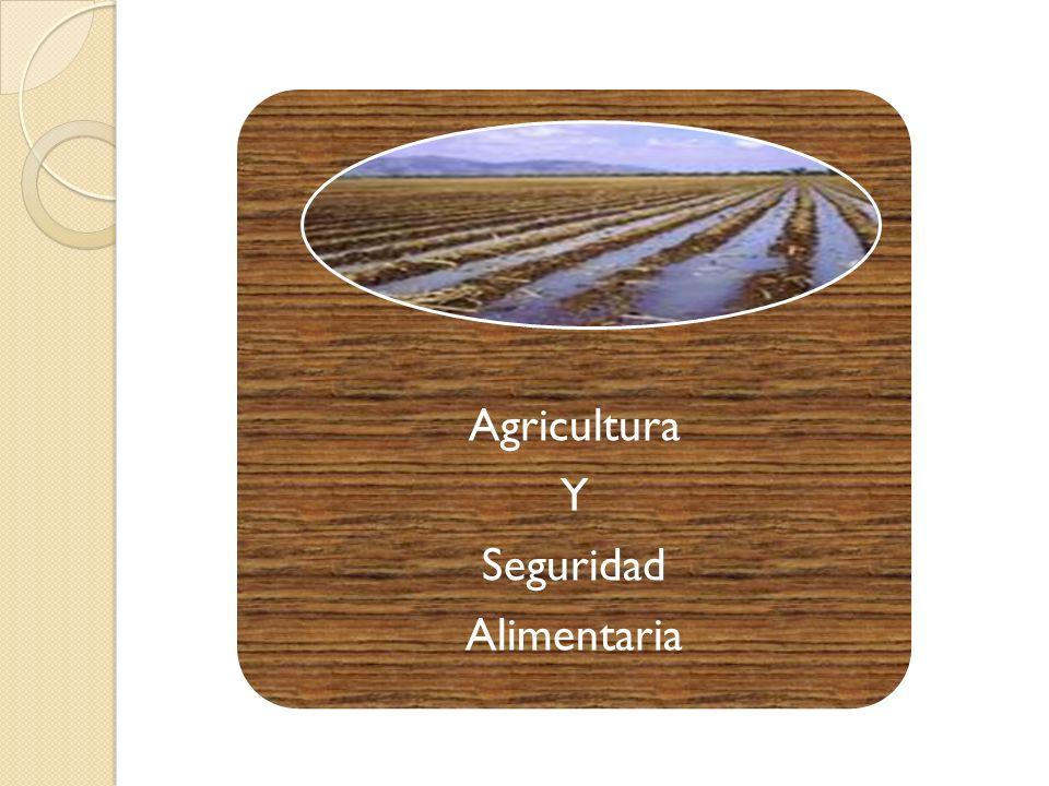 Agricultura Y Seguridad Alimentaria