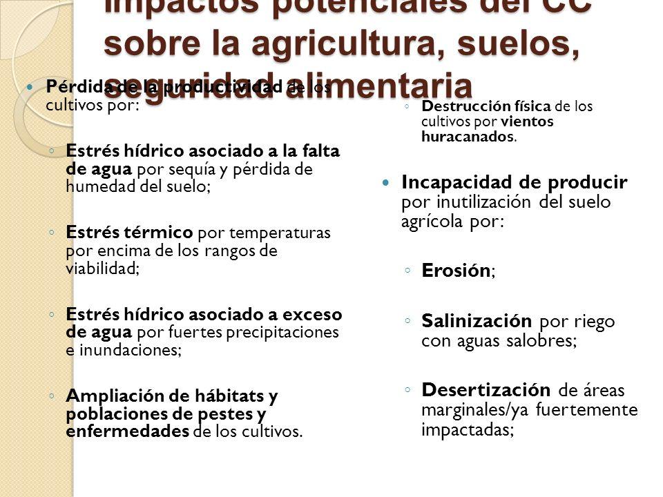 Impactos potenciales del CC sobre la agricultura, suelos, seguridad alimentaria Pérdida de la productividad de los cultivos por: Estrés hídrico asocia