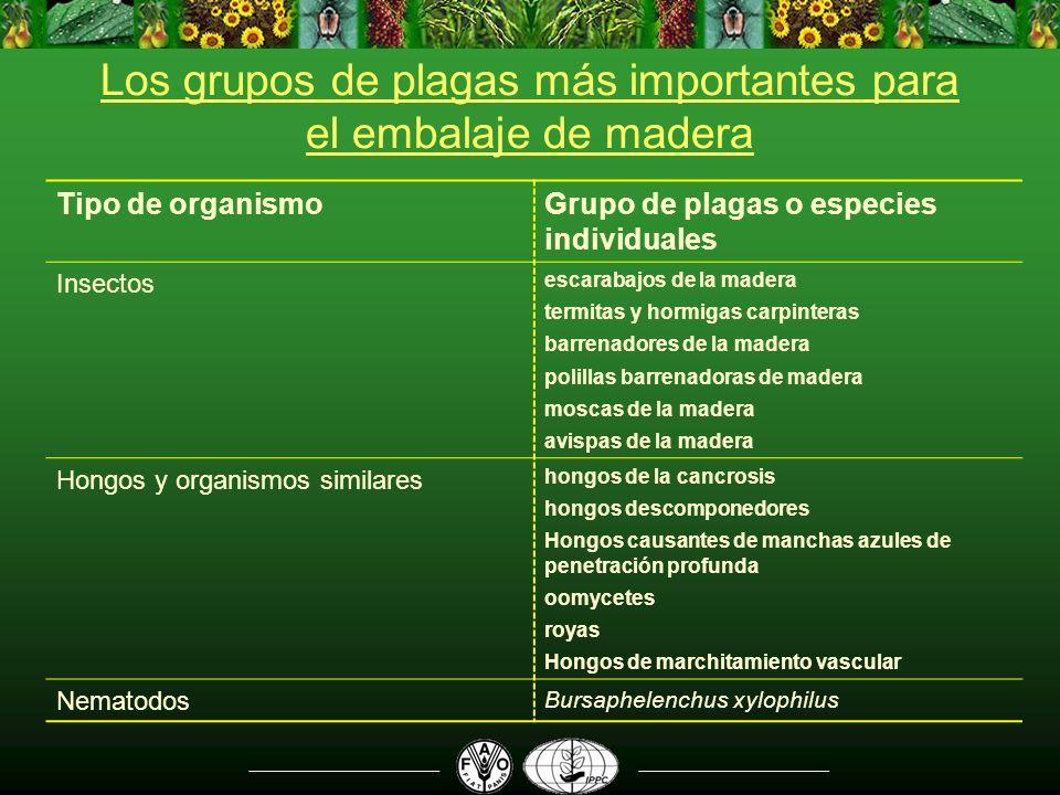 Los grupos de plagas más importantes para el embalaje de madera Tipo de organismoGrupo de plagas o especies individuales Insectos escarabajos de la ma
