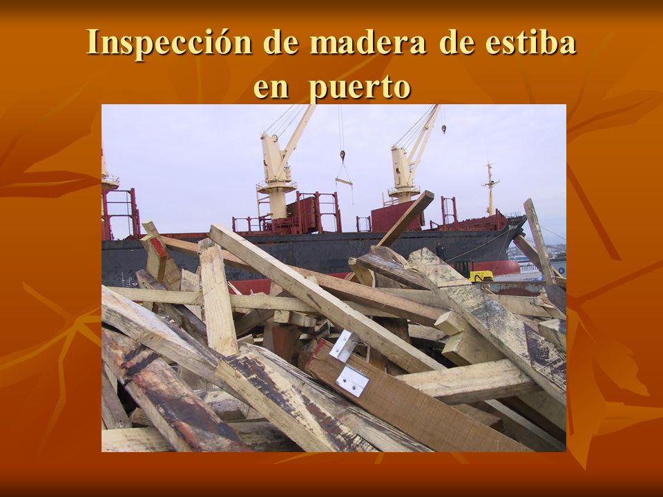 Inspección de madera de estiba en puerto