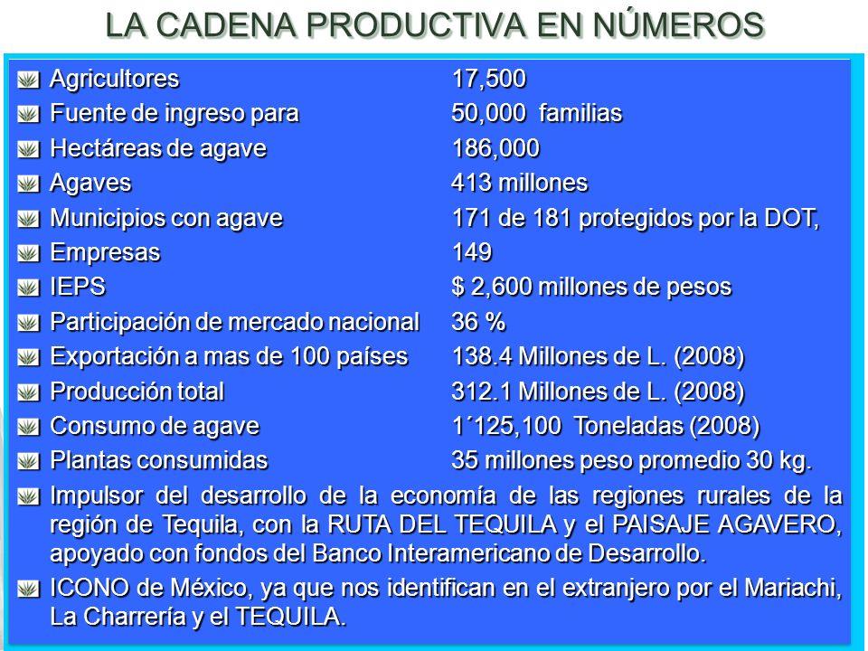 LA CADENA PRODUCTIVA EN NÚMEROS Agricultores17,500 Fuente de ingreso para 50,000 familias Hectáreas de agave186,000 Agaves413 millones Municipios con