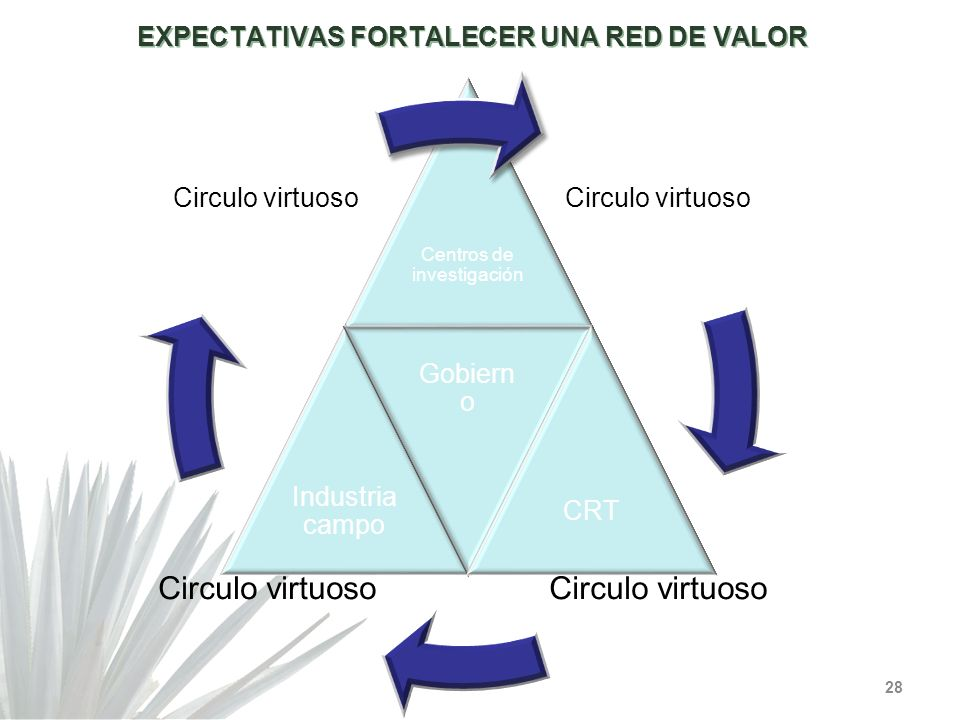 EXPECTATIVAS FORTALECER UNA RED DE VALOR 28