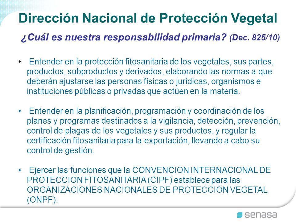 Dirección Nacional de Protección Vegetal ¿Cuál es nuestra responsabilidad primaria? (Dec. 825/10) Entender en la protección fitosanitaria de los veget