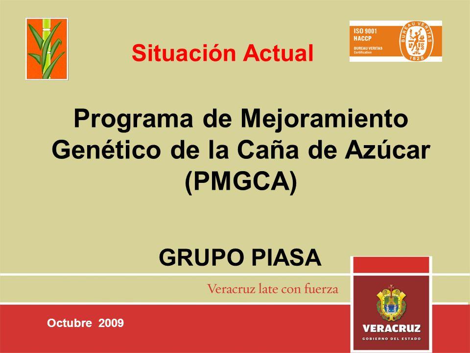 Programa de Mejoramiento Genético de la Caña de Azúcar (PMGCA) GRUPO PIASA Octubre 2009 Situación Actual