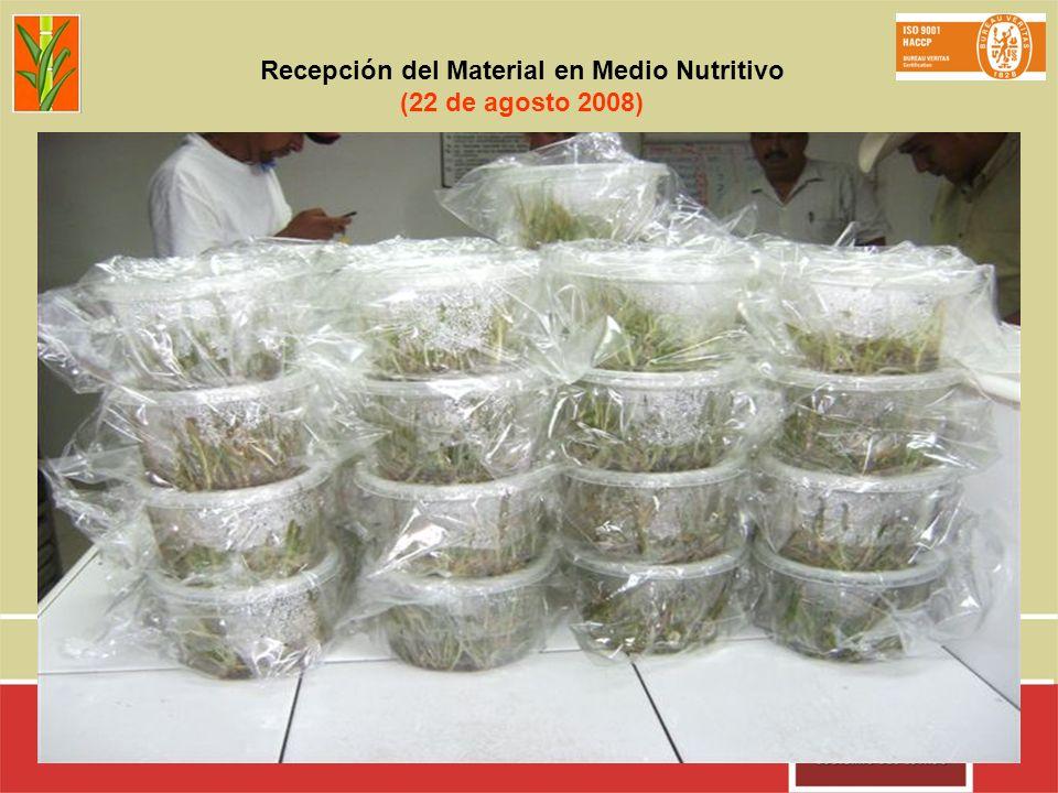 Recepción del Material en Medio Nutritivo (22 de agosto 2008)