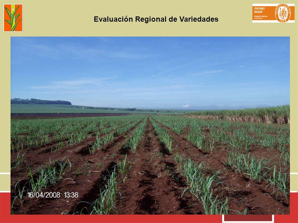 Evaluación Regional de Variedades