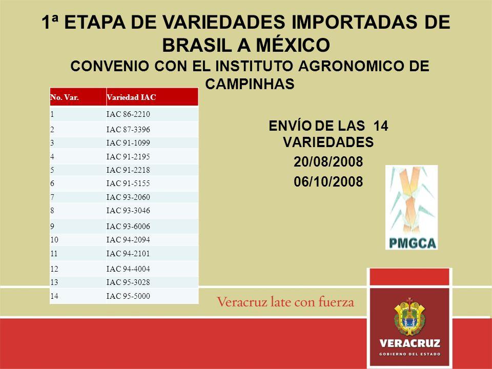 ENVÍO DE LAS 14 VARIEDADES 20/08/2008 06/10/2008 No. Var.Variedad IAC 1IAC 86-2210 2IAC 87-3396 3IAC 91-1099 4IAC 91-2195 5IAC 91-2218 6IAC 91-5155 7I