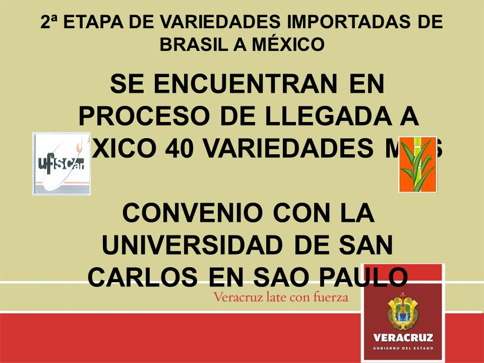 2ª ETAPA DE VARIEDADES IMPORTADAS DE BRASIL A MÉXICO SE ENCUENTRAN EN PROCESO DE LLEGADA A MÉXICO 40 VARIEDADES MAS CONVENIO CON LA UNIVERSIDAD DE SAN