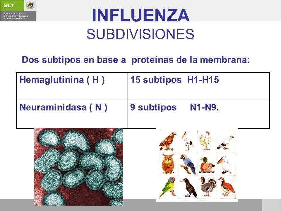 INFLUENZA SUBDIVISIONES Dos subtipos en base a proteínas de la membrana: Hemaglutinina ( H )15 subtipos H1-H15 Neuraminidasa ( N )9 subtipos N1-N9.