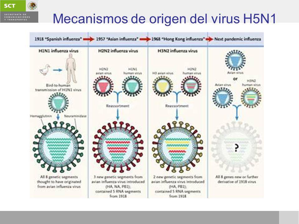 Mecanismos de origen del virus H5N1