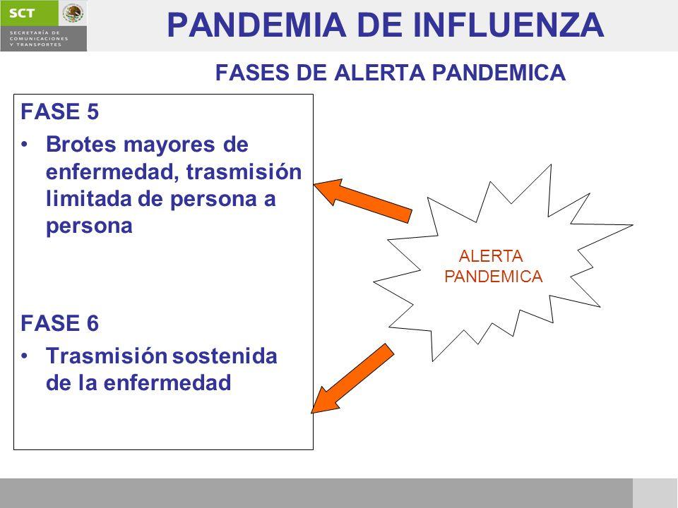 PANDEMIA DE INFLUENZA FASES DE ALERTA PANDEMICA FASE 5 Brotes mayores de enfermedad, trasmisión limitada de persona a persona FASE 6 Trasmisión sosten