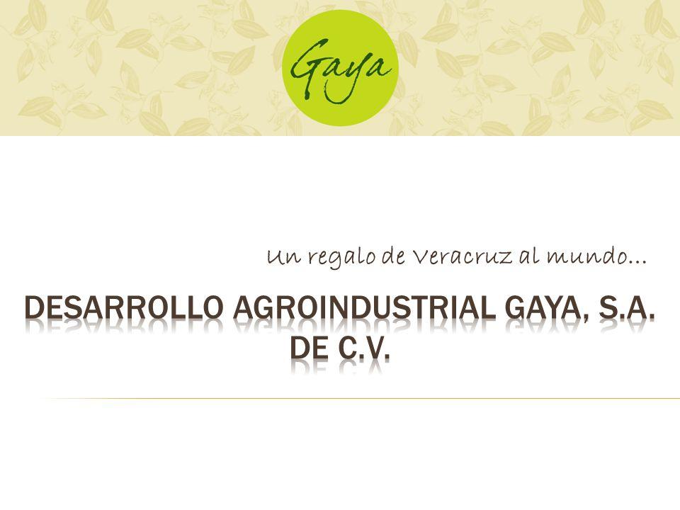 Preocupados siempre por el desarrollo y calidad de la Vainilla Mexicana el Q.F.B Italo Gaya Capellini construye el Beneficio de Vainilla mas grande de América logrando junto con su hija la Lic.