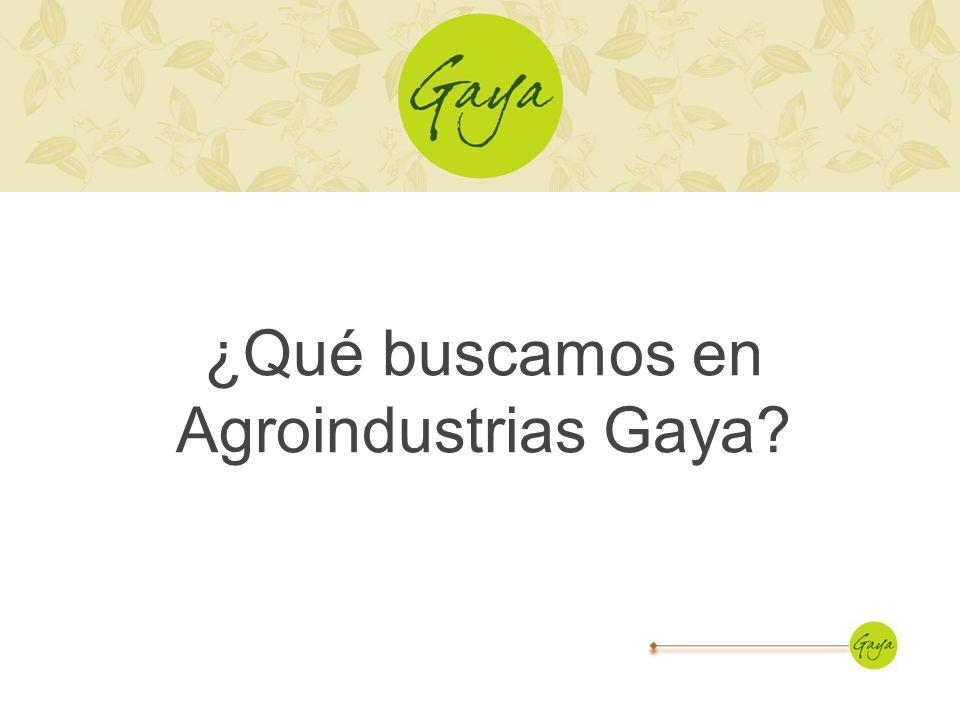 ¿Qué buscamos en Agroindustrias Gaya?