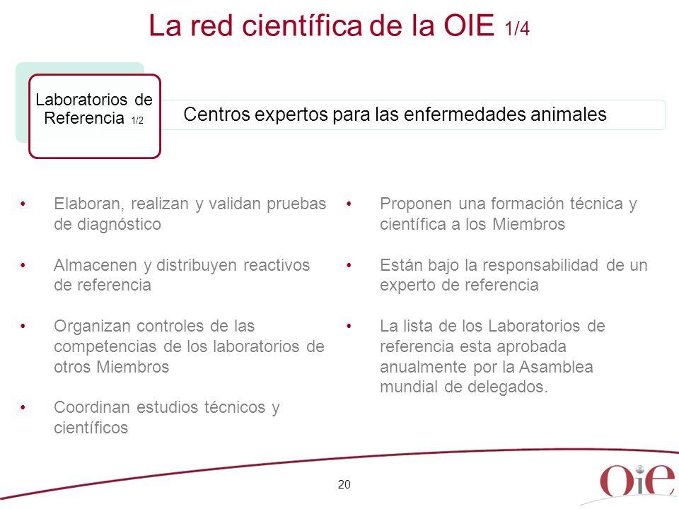 20 La red científica de la OIE 1/4 Elaboran, realizan y validan pruebas de diagnóstico Almacenen y distribuyen reactivos de referencia Organizan contr