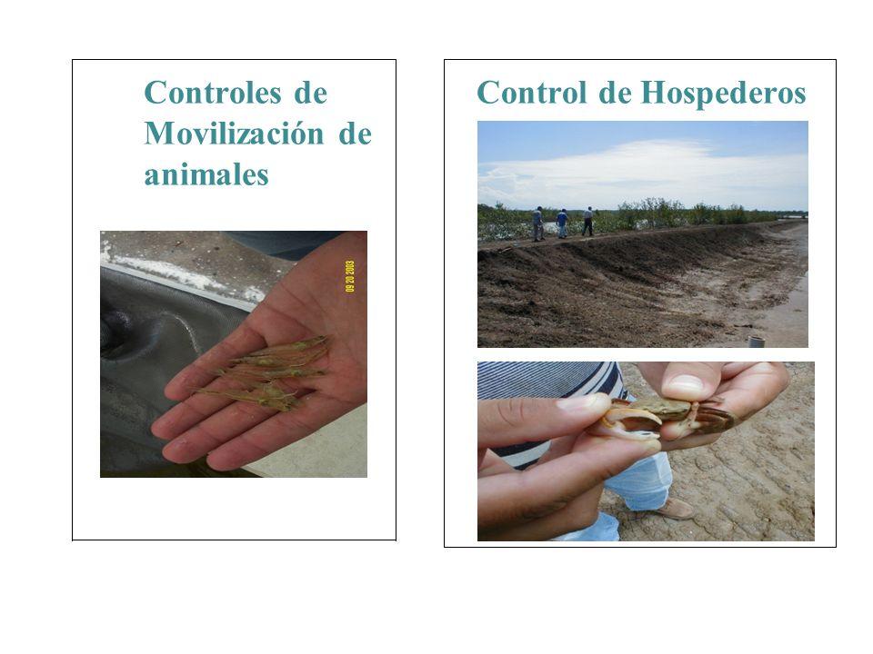 Controles de Movilización de animales Control de Hospederos