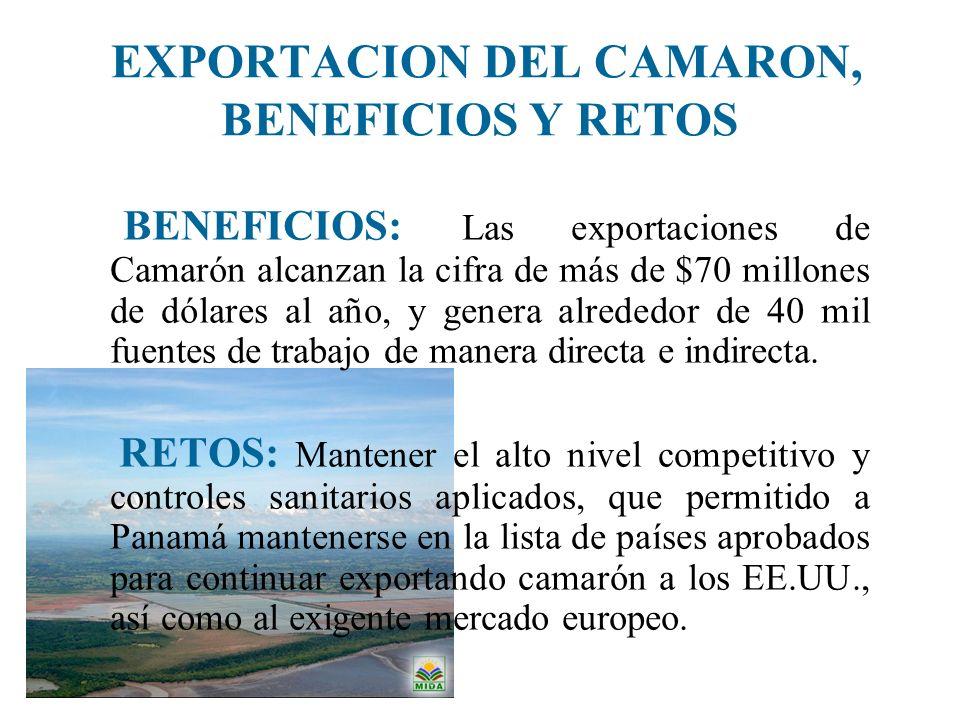 EXPORTACION DEL CAMARON, BENEFICIOS Y RETOS BENEFICIOS: Las exportaciones de Camarón alcanzan la cifra de más de $70 millones de dólares al año, y gen