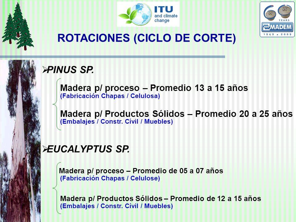 ROTACIONES (CICLO DE CORTE) PINUS SP. EUCALYPTUS SP.
