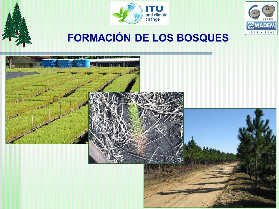 FORMACIÓN DE LOS BOSQUES
