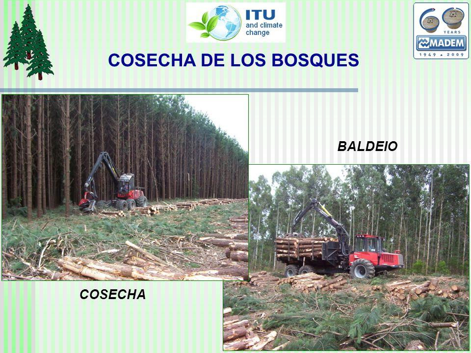 COSECHA BALDEIO COSECHA DE LOS BOSQUES