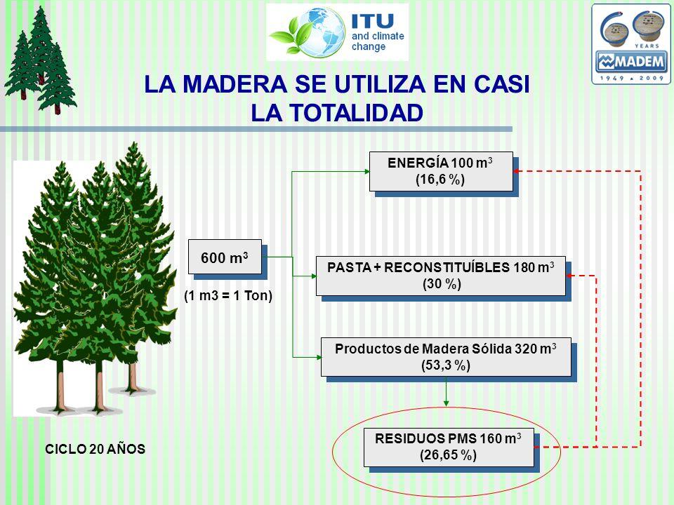LA MADERA SE UTILIZA EN CASI LA TOTALIDAD 600 m 3 CICLO 20 AÑOS ENERGÍA 100 m 3 (16,6 %) ENERGÍA 100 m 3 (16,6 %) RESIDUOS PMS 160 m 3 (26,65 %) PASTA + RECONSTITUÍBLES 180 m 3 (30 %) PASTA + RECONSTITUÍBLES 180 m 3 (30 %) Productos de Madera Sólida 320 m 3 (53,3 %) Productos de Madera Sólida 320 m 3 (53,3 %) (1 m3 = 1 Ton)