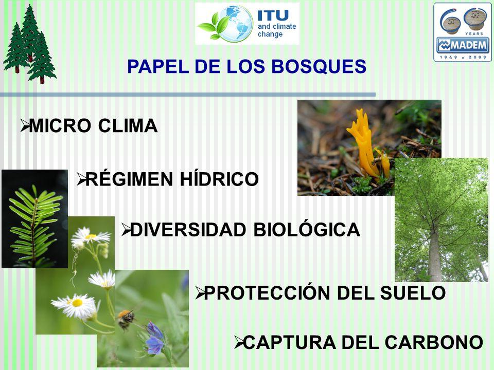 MICRO CLIMA RÉGIMEN HÍDRICO DIVERSIDAD BIOLÓGICA PROTECCIÓN DEL SUELO CAPTURA DEL CARBONO PAPEL DE LOS BOSQUES