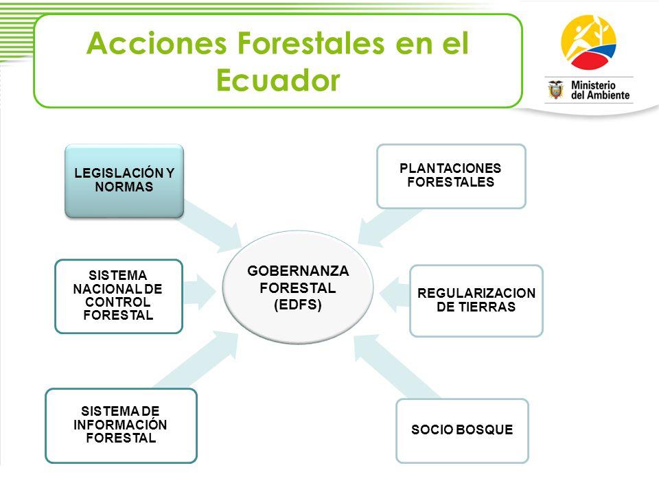 Acciones Forestales en el Ecuador GOBERNANZA FORESTAL (EDFS) SISTEMA DE INFORMACIÓN FORESTAL SISTEMA NACIONAL DE CONTROL FORESTAL PLANTACIONES FORESTA