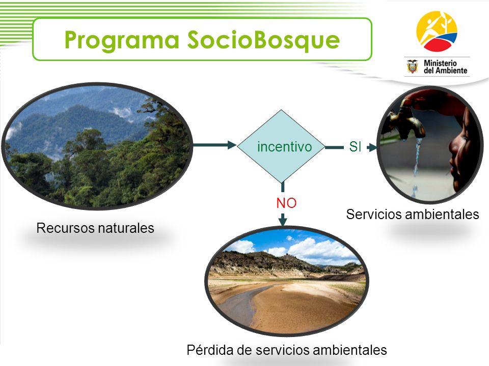 incentivoSI NO Recursos naturales Servicios ambientales Pérdida de servicios ambientales Programa SocioBosque