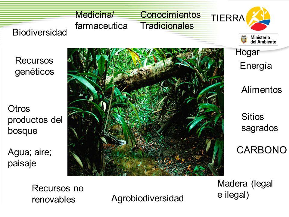 Biodiversidad Recursos genéticos Otros productos del bosque Madera (legal e ilegal) Recursos no renovables TIERRA Medicina/ farmaceutica Hogar Sitios