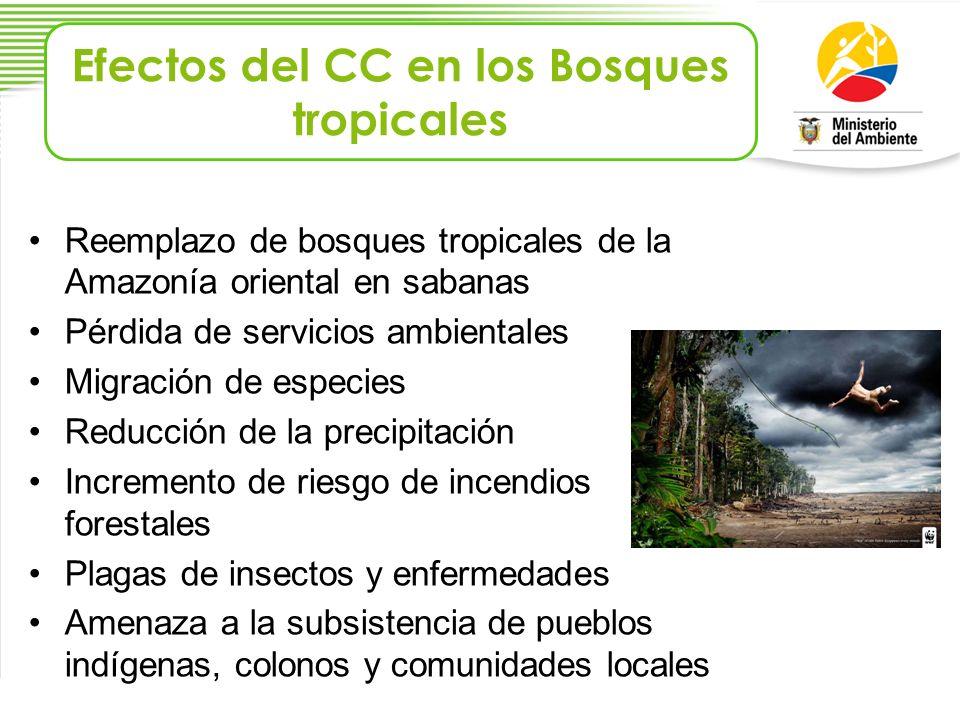 Reemplazo de bosques tropicales de la Amazonía oriental en sabanas Pérdida de servicios ambientales Migración de especies Reducción de la precipitació