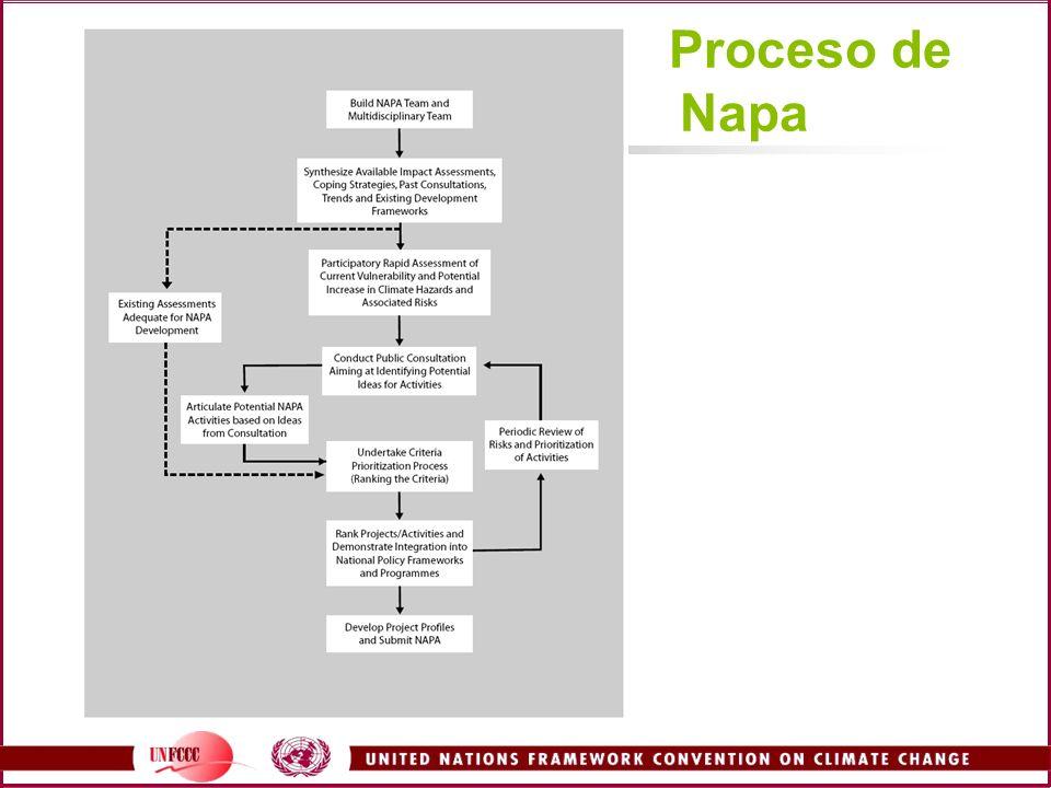 Proceso de Napa