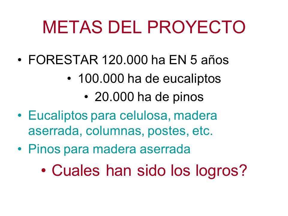 METAS DEL PROYECTO FORESTAR 120.000 ha EN 5 años 100.000 ha de eucaliptos 20.000 ha de pinos Eucaliptos para celulosa, madera aserrada, columnas, postes, etc.